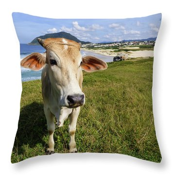 A Cow At The Beach Throw Pillow
