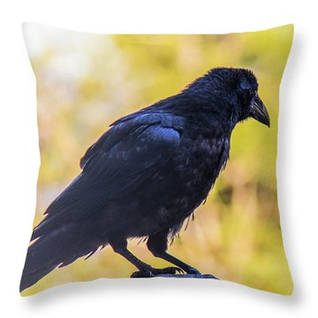 Throw Pillow featuring the photograph A Crow Looks Away by Jonny D