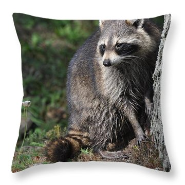 A Curious Raccoon Throw Pillow