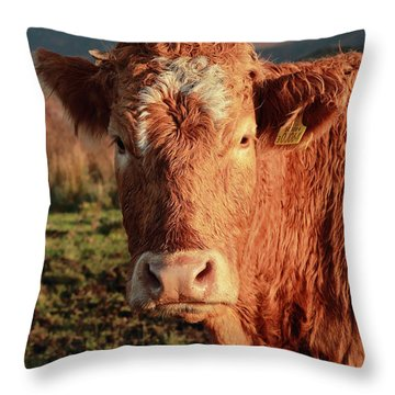 A Curious Red Cow Throw Pillow