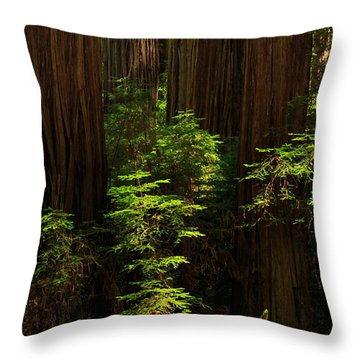 A Deer In The Redwoods Throw Pillow