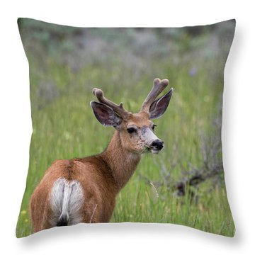 A Deer In Yellowstone National Park  Throw Pillow