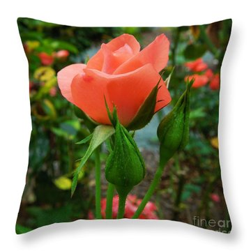 Throw Pillow featuring the photograph A Delicate Pink Rose by Chad and Stacey Hall