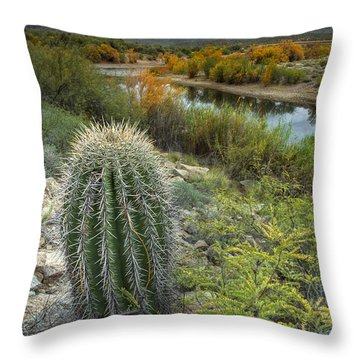 A Desert Oasis  Throw Pillow by Sue Cullumber