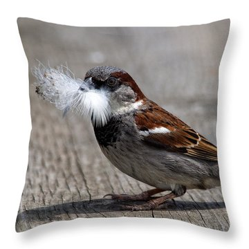 A Feather For The Nest Throw Pillow
