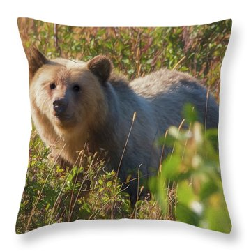 A  Female Grizzly Bear Looking Alertly At The Camera. Throw Pillow