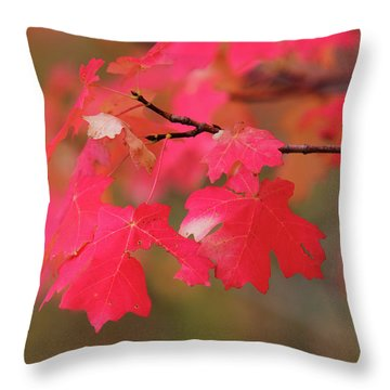 A Flash Of Autumn Throw Pillow