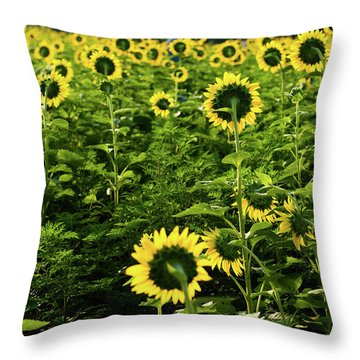 Throw Pillow featuring the photograph A Flock Of Blooming Sunflowers by Dennis Dame