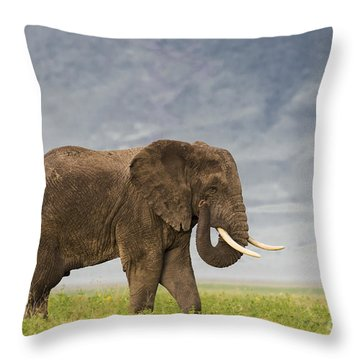 Throw Pillow featuring the photograph A Gentle Giant by Sandra Bronstein