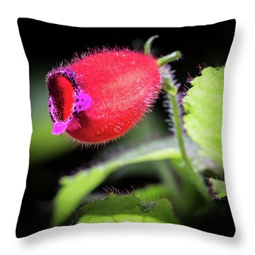 A Gesneriad Throw Pillow