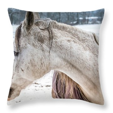 A Girlfriend Of The Horse Amigo Throw Pillow