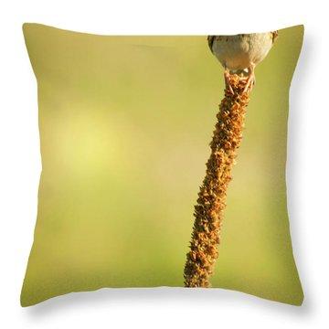 Throw Pillow featuring the photograph A Great Sense Of Balance IIi by John De Bord