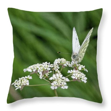 A Green-veined White (pieris Napi) Throw Pillow by John Edwards