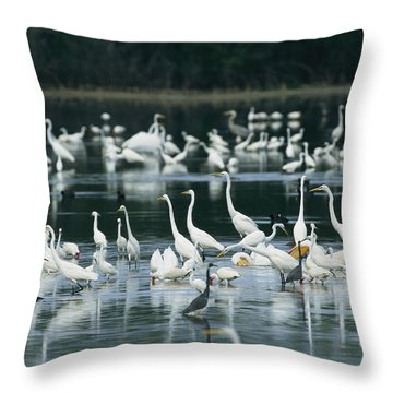 A Group Of Egrets, Herons,  Ibises Throw Pillow