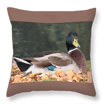 A Handsome Mallard Throw Pillow