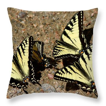 A Kaleidoscope Of Swallowtails Throw Pillow