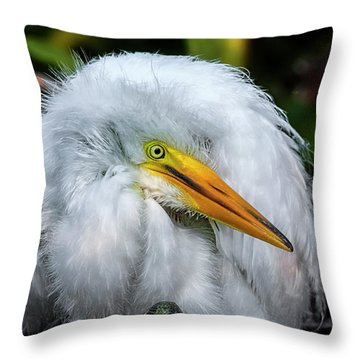 A Little Bit Of Fluff Throw Pillow