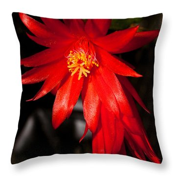 A Little Fire Throw Pillow by Christopher Holmes