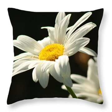 A Little Less Than Perfect Sunshine Daisy  Throw Pillow by Cathy  Beharriell