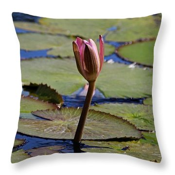 Throw Pillow featuring the photograph A Lonely Vigil by Michiale Schneider