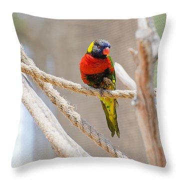 A Lorikeet From The Rainforest Throw Pillow