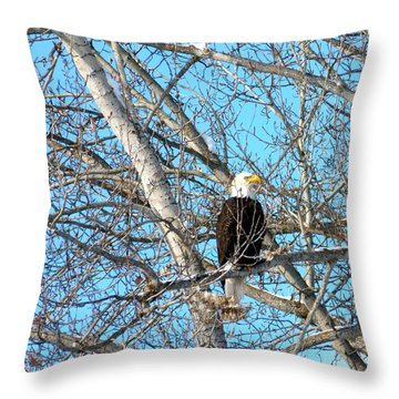 Throw Pillow featuring the photograph A Majestic Bald Eagle by Will Borden