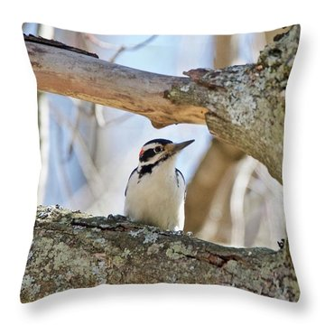 A Male Downey Woodpecker  1111 Throw Pillow by Michael Peychich