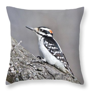 A Male Downey Woodpecker 1120 Throw Pillow by Michael Peychich