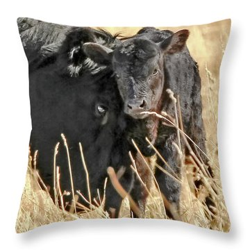A Mother's Love Black Cow And Calf Throw Pillow by Jennie Marie Schell