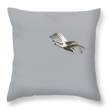 Throw Pillow featuring the photograph A Pair Of Swans 2017-1 by Thomas Young