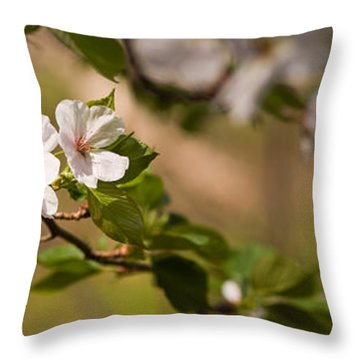 A Panoramic View Of A Cherry Tree Throw Pillow