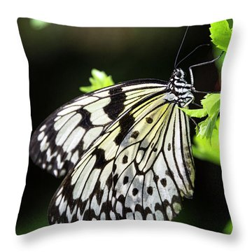 Throw Pillow featuring the photograph A Paper Kite Butterfly On A Leaf  by Saija Lehtonen