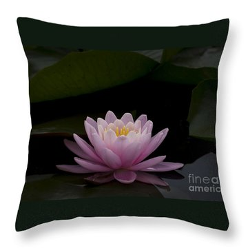 Throw Pillow featuring the photograph A Perfect Bloom by Andrea Silies