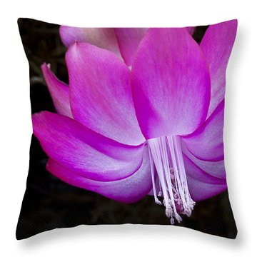 Throw Pillow featuring the photograph A Pink Christmas Cactus by Ken Barrett