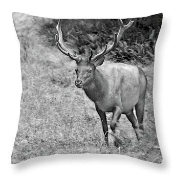 A Rack Of Antlers - Roosevelt Elk - Olympic National Park Wa Throw Pillow by Christine Till