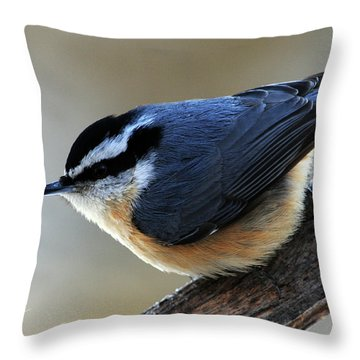 A Red-breasted Nuthatch Throw Pillow