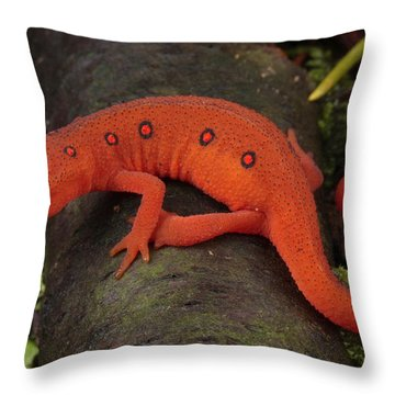 A Red Eft Crawls On The Forest Floor Throw Pillow