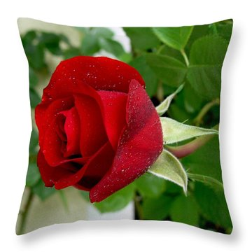 A Red Rose In The Dew Of Pearls Hours Throw Pillow by Helmut Rottler