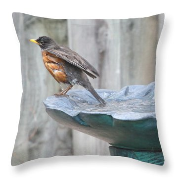 A Robin Relaxes After A Vigourous Bath Throw Pillow