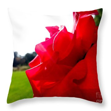 A Rose In The Sun Throw Pillow