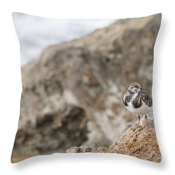 A Ruddy Turnstone Perched On The Rocks Throw Pillow