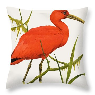 A Scarlet Ibis From South America Throw Pillow by Kenneth Lilly