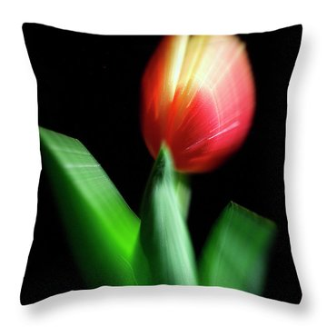 A Single Bloom Throw Pillow by Frederic A Reinecke