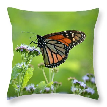 Throw Pillow featuring the photograph A Sip Of Mist by JD Grimes