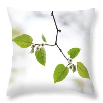 A Sky Behind Leaves Throw Pillow