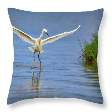 A Snowy Egret Dip-fishing Throw Pillow by Rick Berk