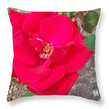 A Soft Red Rose Throw Pillow by Robin Coaker
