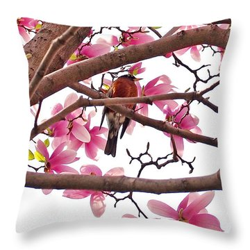 A Songbird In The Magnolia Tree - Square Throw Pillow
