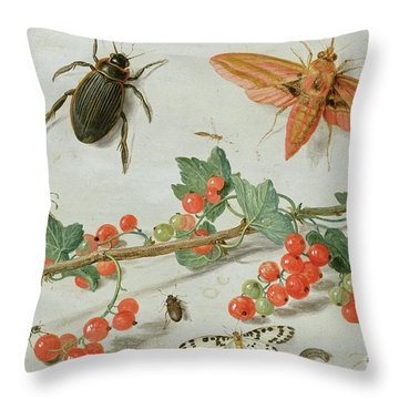 A Sprig Of Redcurrants With An Elephant Hawk Moth, A Magpie Moth And Other Insects, 1657 Throw Pillow