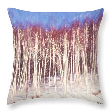 A Stand Of White Birch Trees In Winter. Throw Pillow